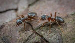 Meilleurs livres sur les fourmis