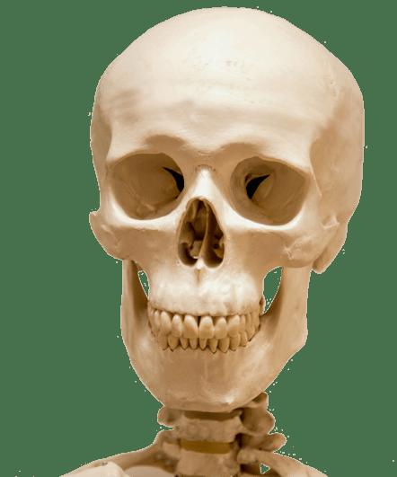 Skeleton Head PNG Transparent Skeleton HeadPNG Images