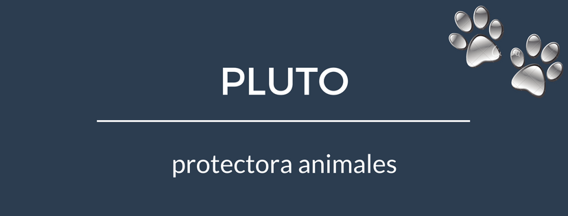 PLUTO protectora animales