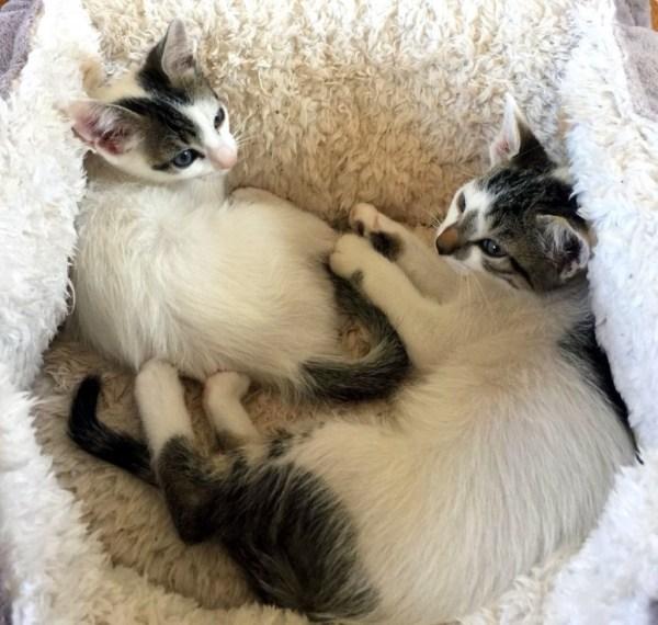 Salem und Silas