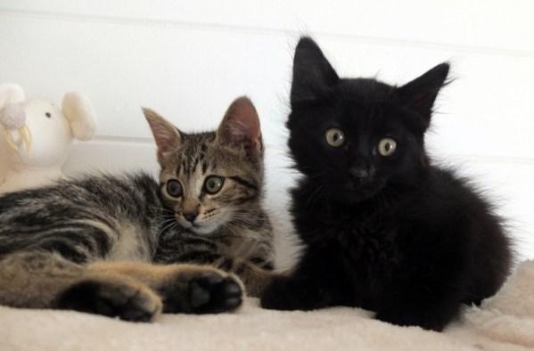 KIMO & KARLO