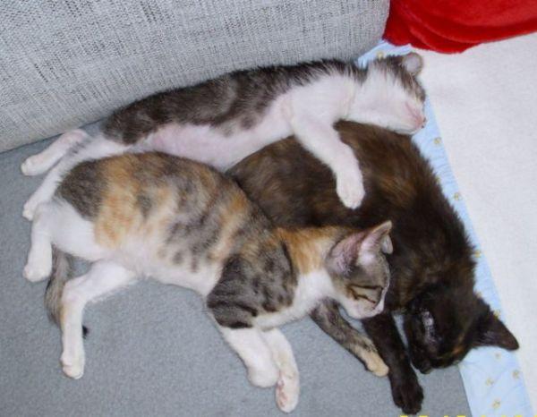 Theo, Ofelia, Bonita