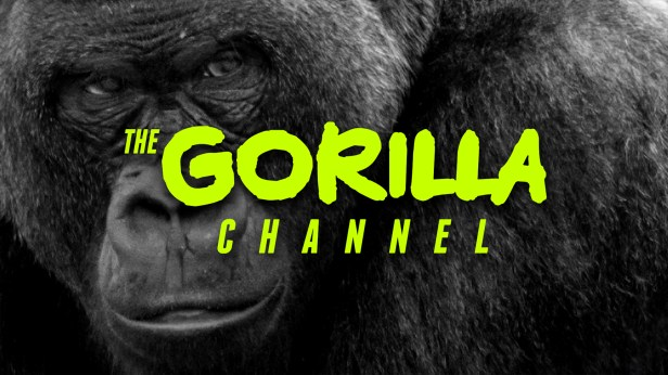 Image result for gorilla channel pluto