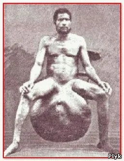 Племя бубал