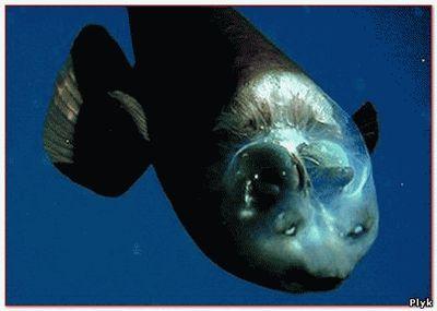 таинственные существа с глубин
