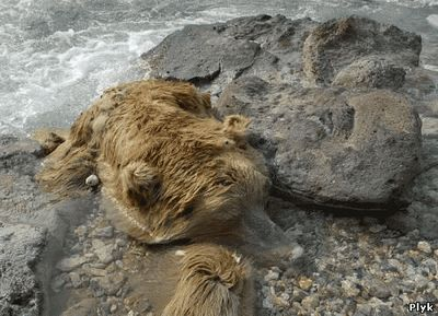 Мертвый медведь в долине смерти