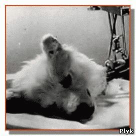 Эксперименты над животными безжалостны, но если не использовать животных, тогда над кем проводить эксперименты?
