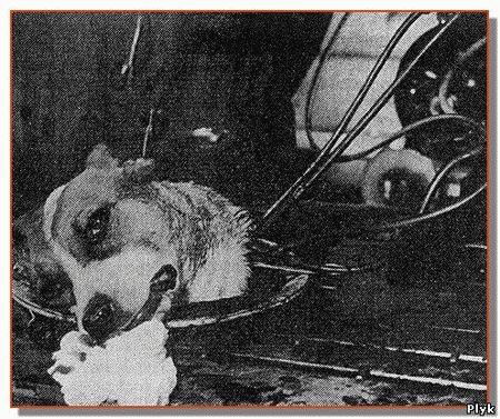 Страшные эксперименты над животными