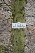 Zřícenina Salon