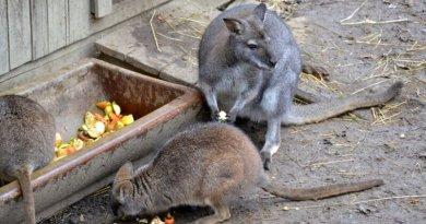 Zoologická a botanická zahrada města Plzně otevírá v omezeném režimu