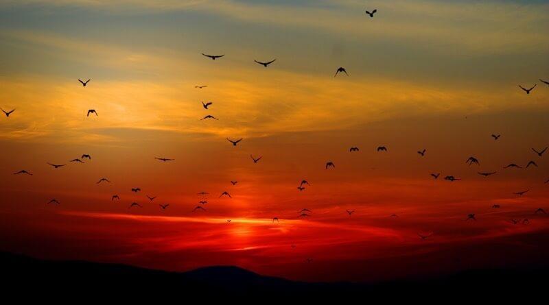 hejno ptáků