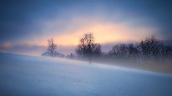 únor bílý pole sílí