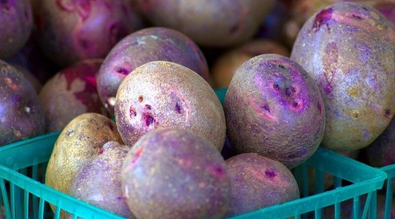 fialové brambory