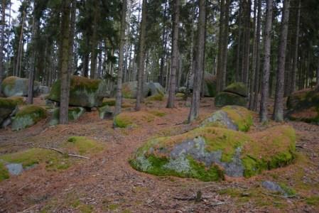 Les je součástí přírodního parku Horní Střela