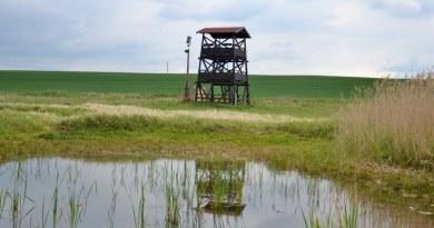 Tip na výlet: Přírodní rezervace a vyhlídková věž Nový rybník