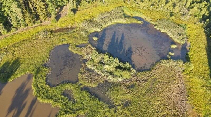 kokotský rybník