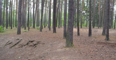 Město Plzeň nabádá návštěvníky svých lesů a parků kohleduplnosti