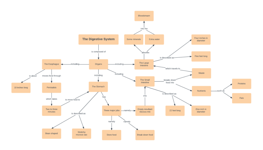 Digestive System Concept Map Template