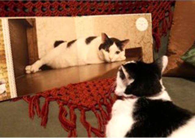 鹿児島フォトスタジオ【写真室ペーパームーン】はペットの写真撮影も可能