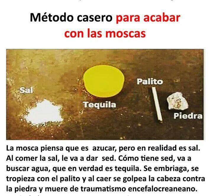 Memes De Borrachos Los Mejores Memes En Espanol Frases De