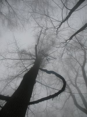 Skeletal Trees