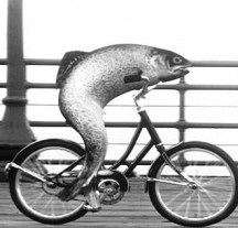 fish-on-bicycle