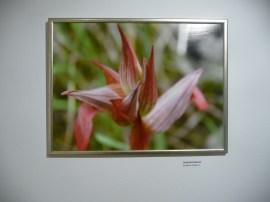 g-izlozba-Flora otoka Korčule i poluotoka Pelješca-01
