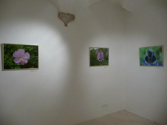 g-izlozba-Flora otoka Korčule i poluotoka Pelješca-05
