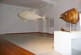 g-izlozba-Kolika je bila tuna u našemu Muzeju-03