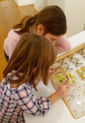 Lepidopterologija