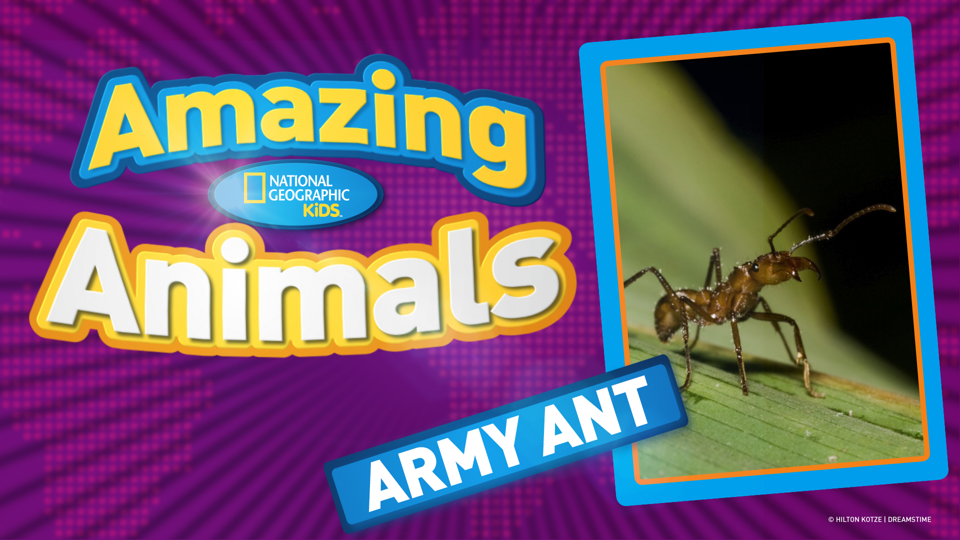 Ant Activities For Kids Ant Life Cycle Chart Use It In