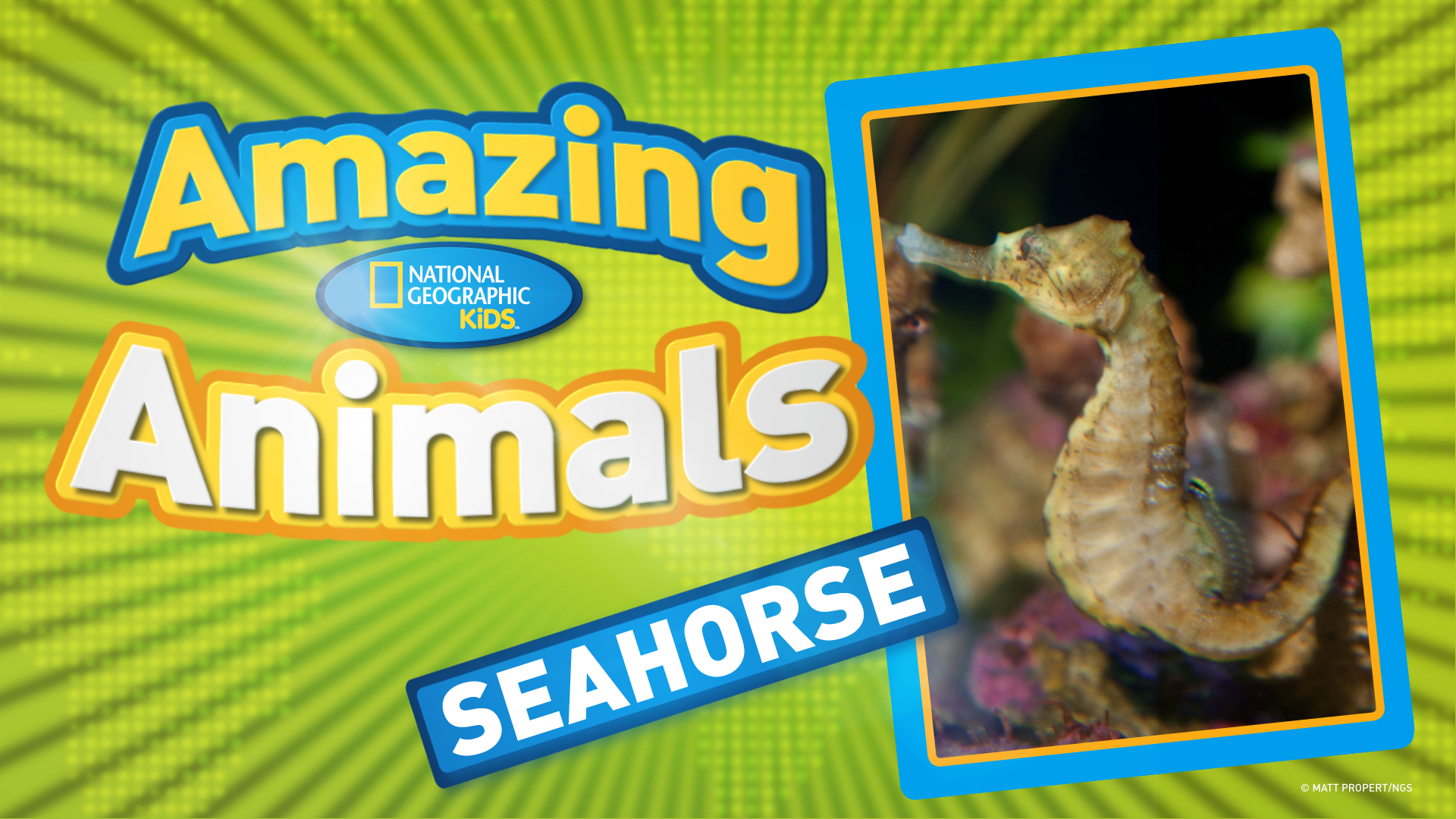 Fun Facts About Seahorses For Kids