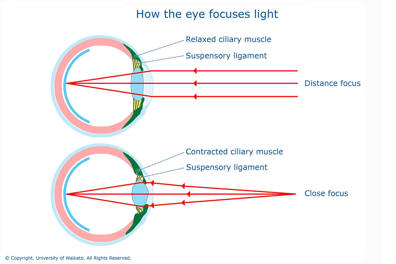 Understanding The Eye To Grade 9 At Gcse Biology Part 2