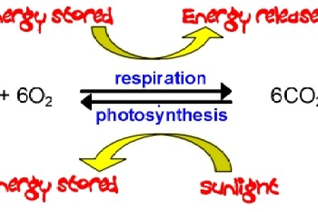 Photosynthesis and cellular respiration equations path decorations respiration and decomposition earthguide online classroom atmospheric transmittance diagram respiration overview of cellular respiration relationship ccuart Choice Image