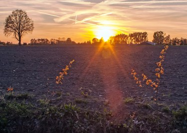 Sunset Miste8_klein
