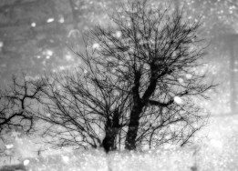 First black and white edit, the branches are clearly visible