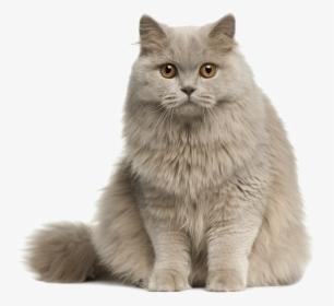 Cute Cat Png Images Transparent Cute Cat Image Download Pngitem