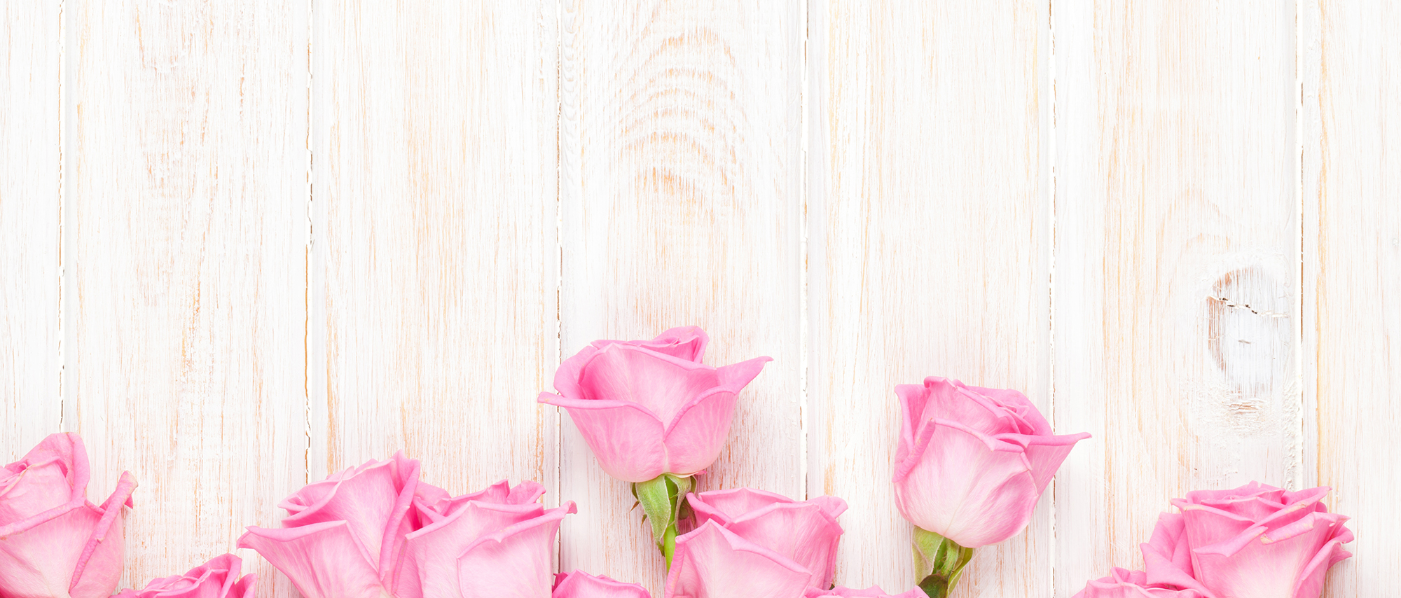Pink Roses Background Happy Valentines Day Valentines Day Pink Background Image For Free Download