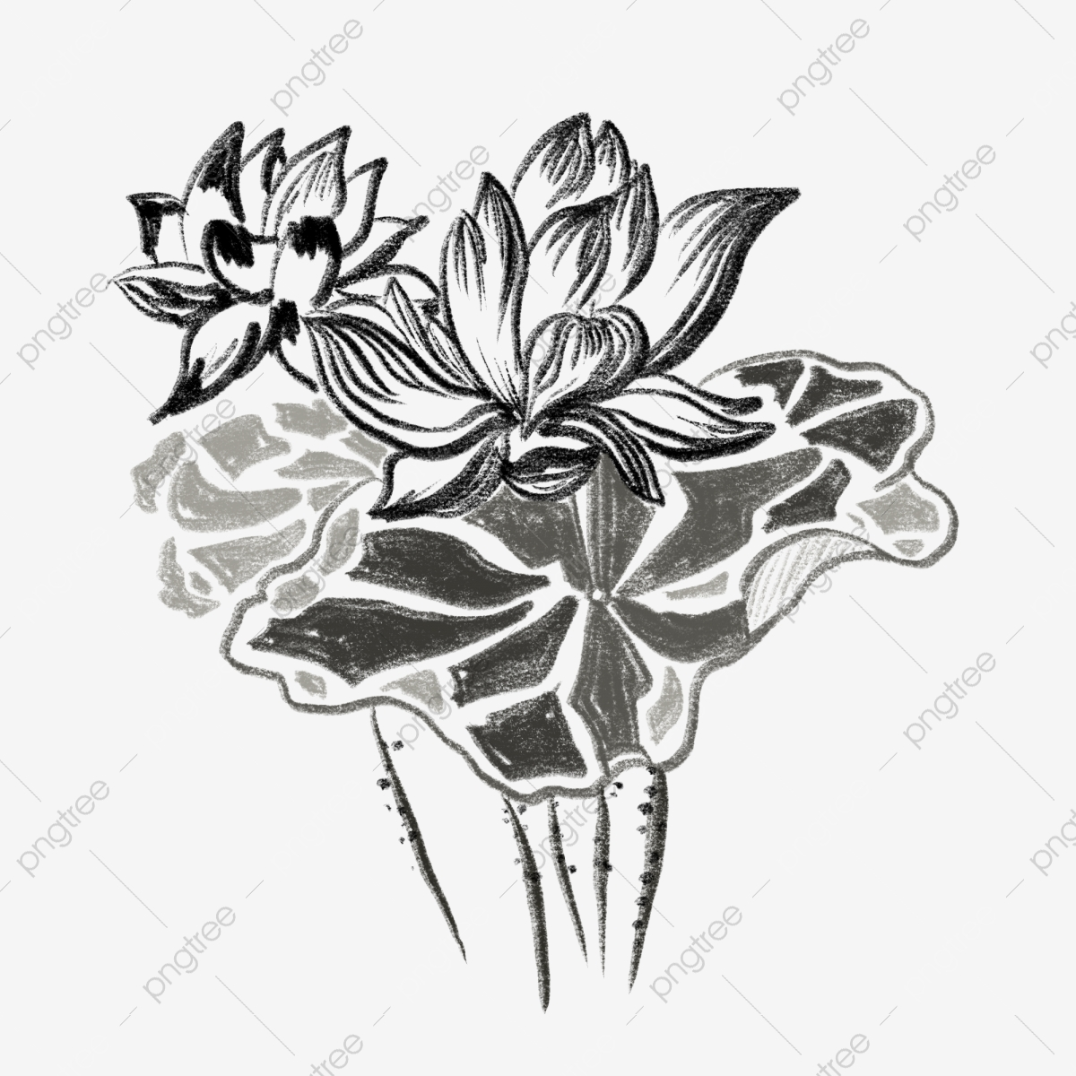 Freehand Ink Lotus Leaf Free Illustration Freehand Ink Leaf Clipart Lotus Clipart Png Transparent Clipart Image And Psd File For Free Download