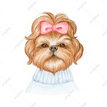 Shih Tzu Png Images Vector And Psd Files Free Download On Pngtree