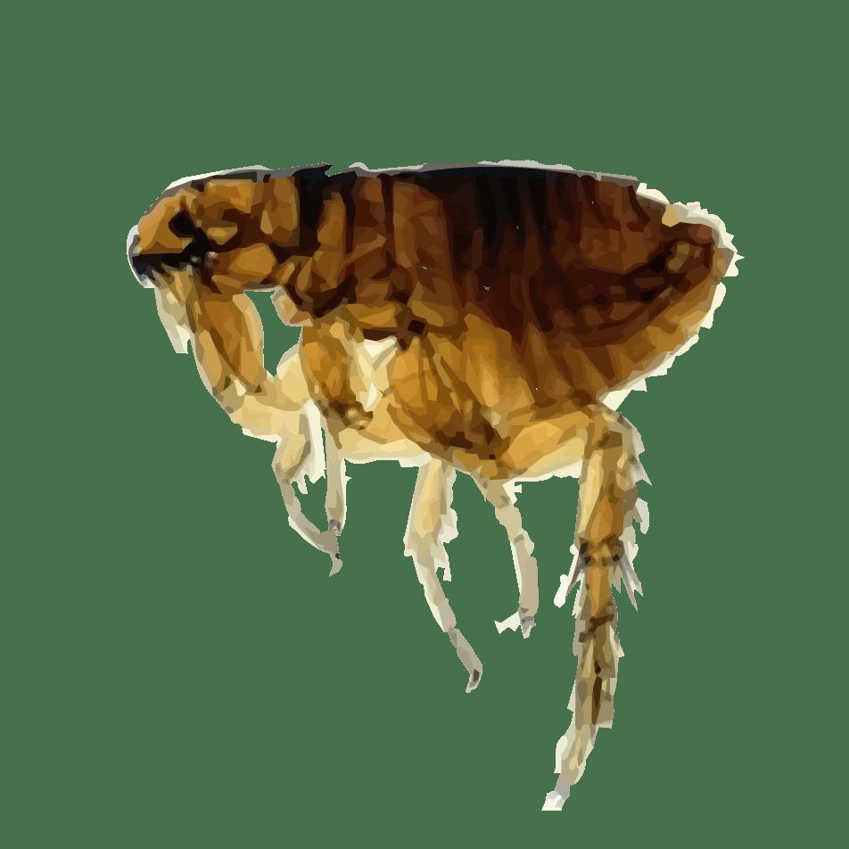 Flea PNG