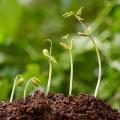 мікроелементита регулятори росту