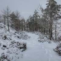 O Estradão - Versão Neve Total