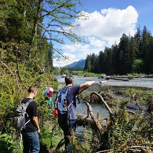 Hoh River: Olympics National Park