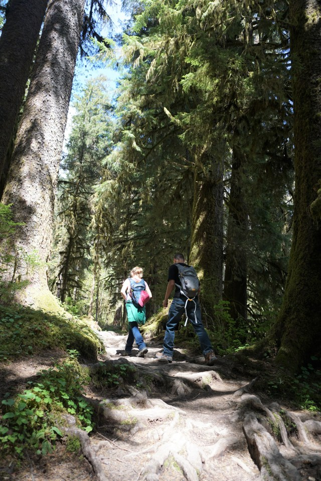 On the Hoh Rainforest trail. Olympic National Park