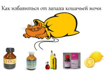 Hilangkan bau kucing air kencing