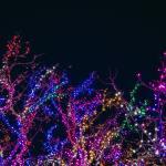 assorted-color-string-lights-752484