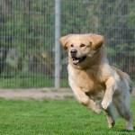 running-dog-750588_1920