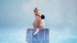 偽装不倫で使われていたスーツケースはどこの?
