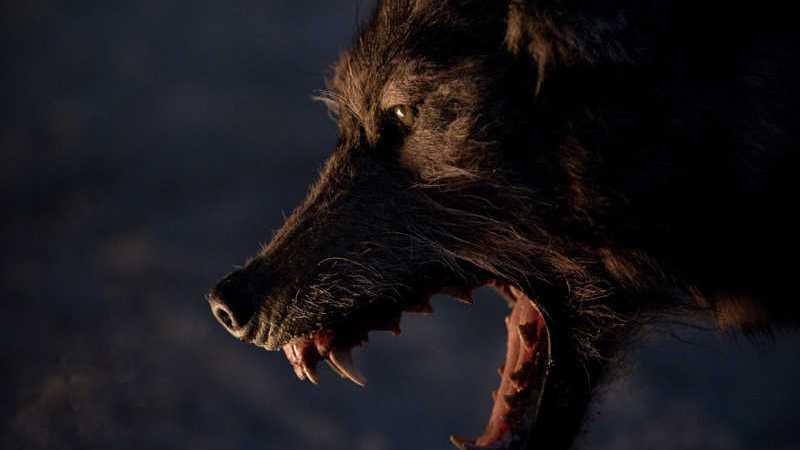 Lista | Os Animais mais Perigosos do Cinema